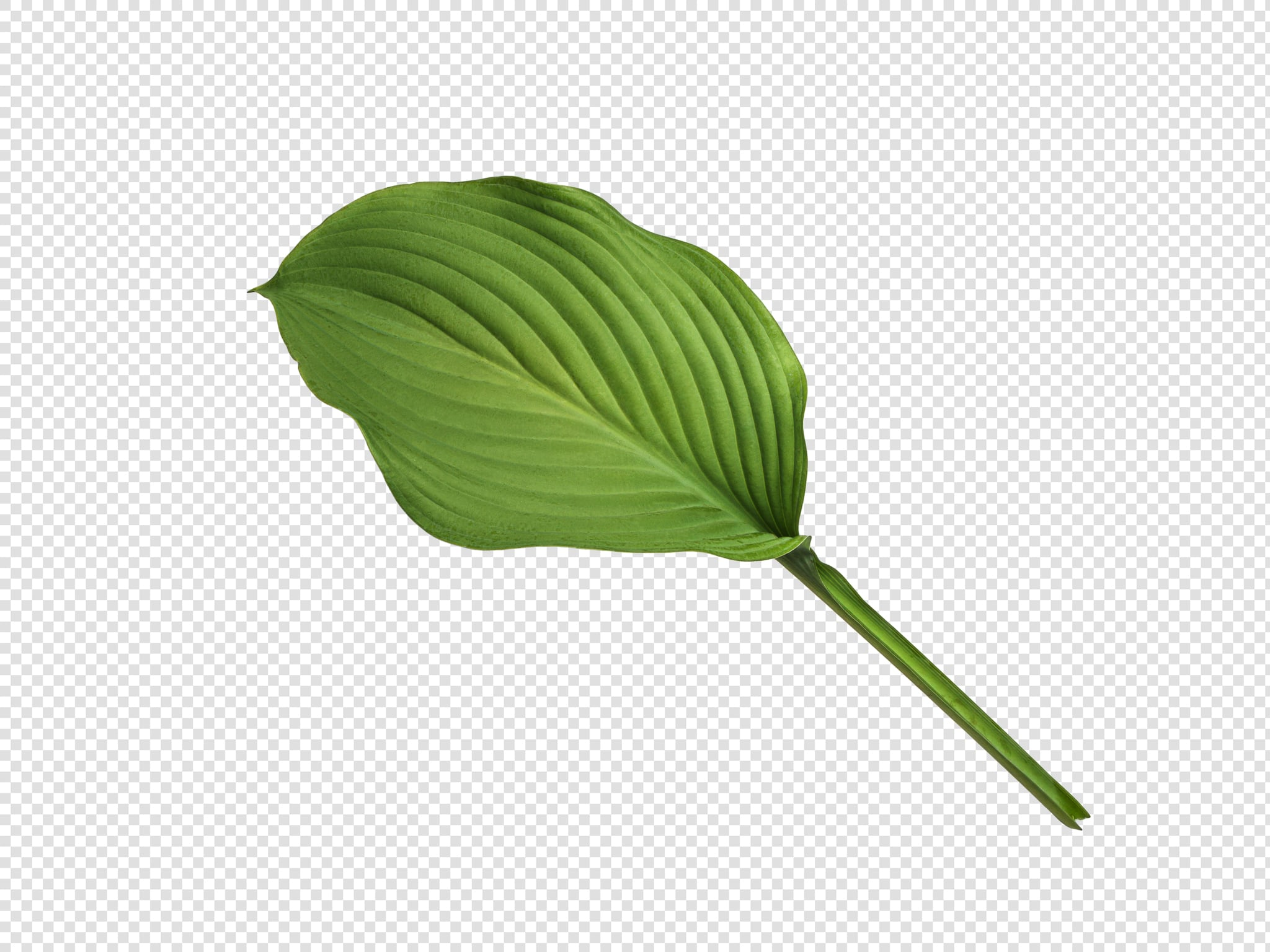 Leaf PSD isolated image