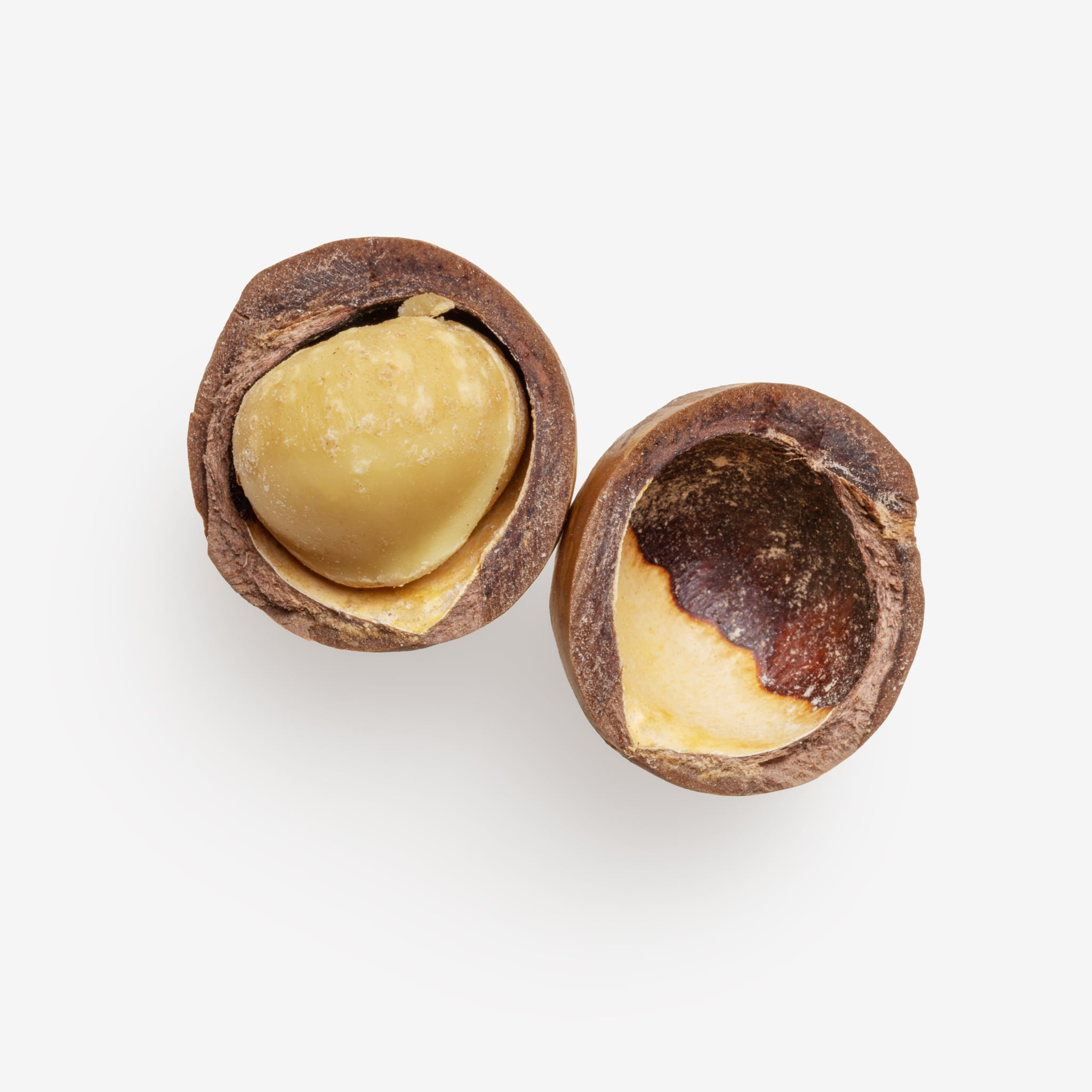 Clean Isolated PSD image of Macadamia on transparent background with separated shadow