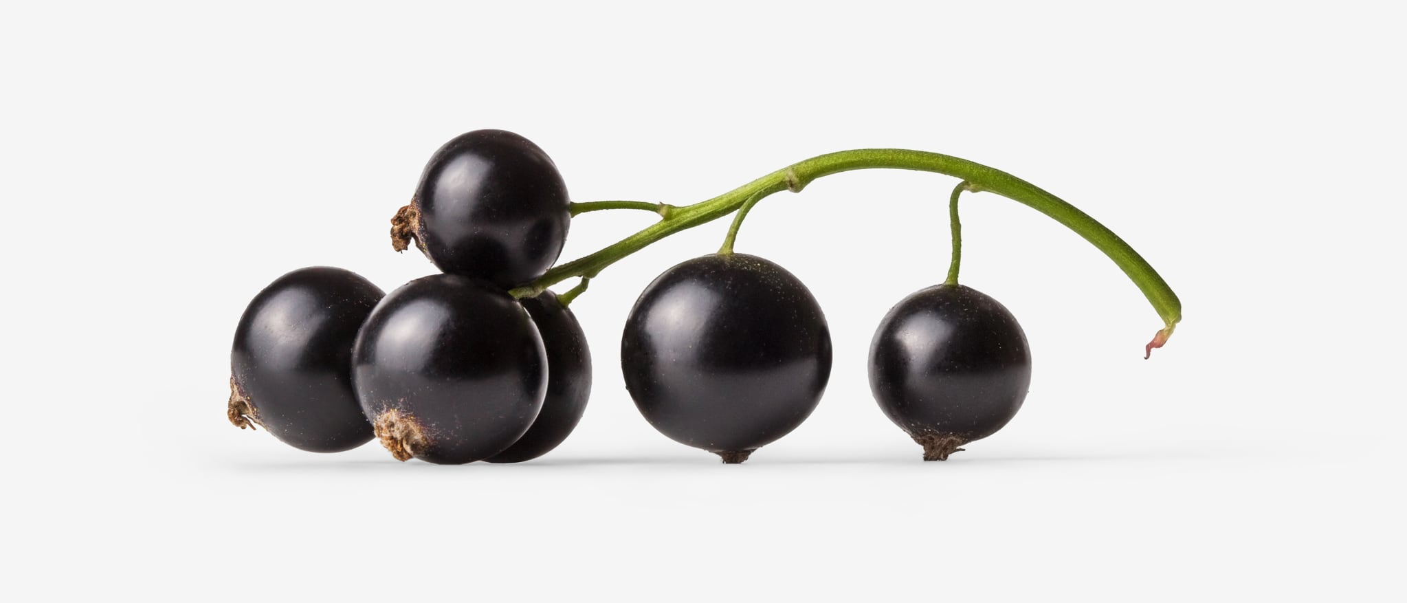 Currant PSD image with transparent background