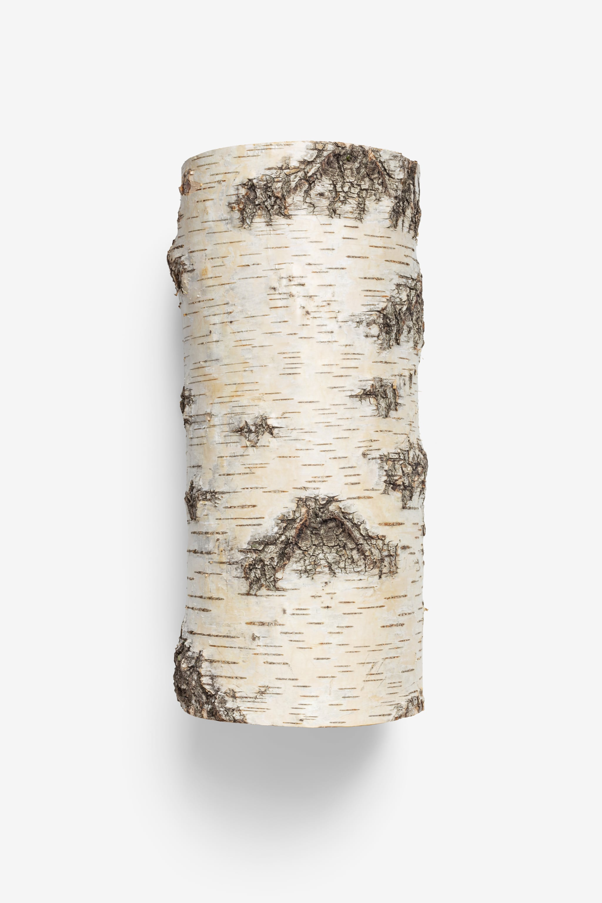 Clean Isolated PSD image of Birch log on transparent background with separated shadow