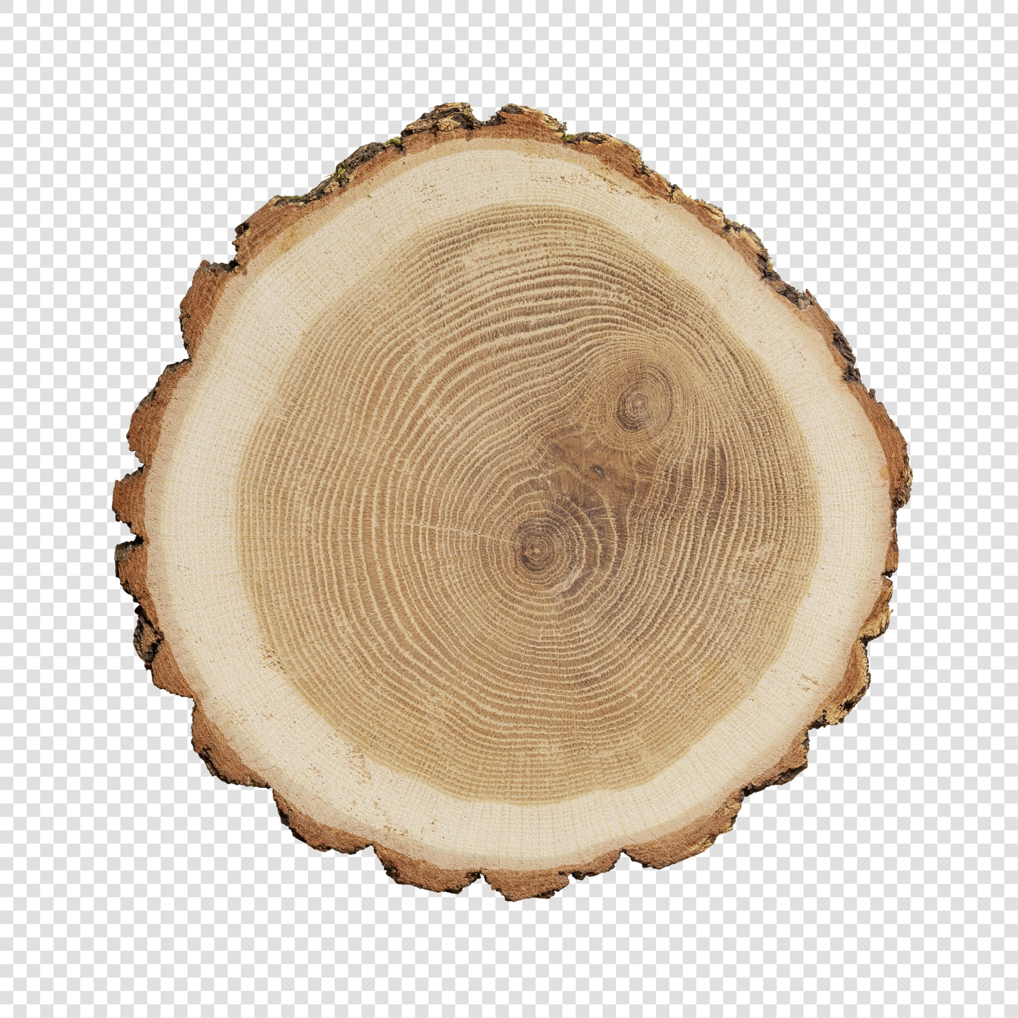 Isolated Wood slice psd image
