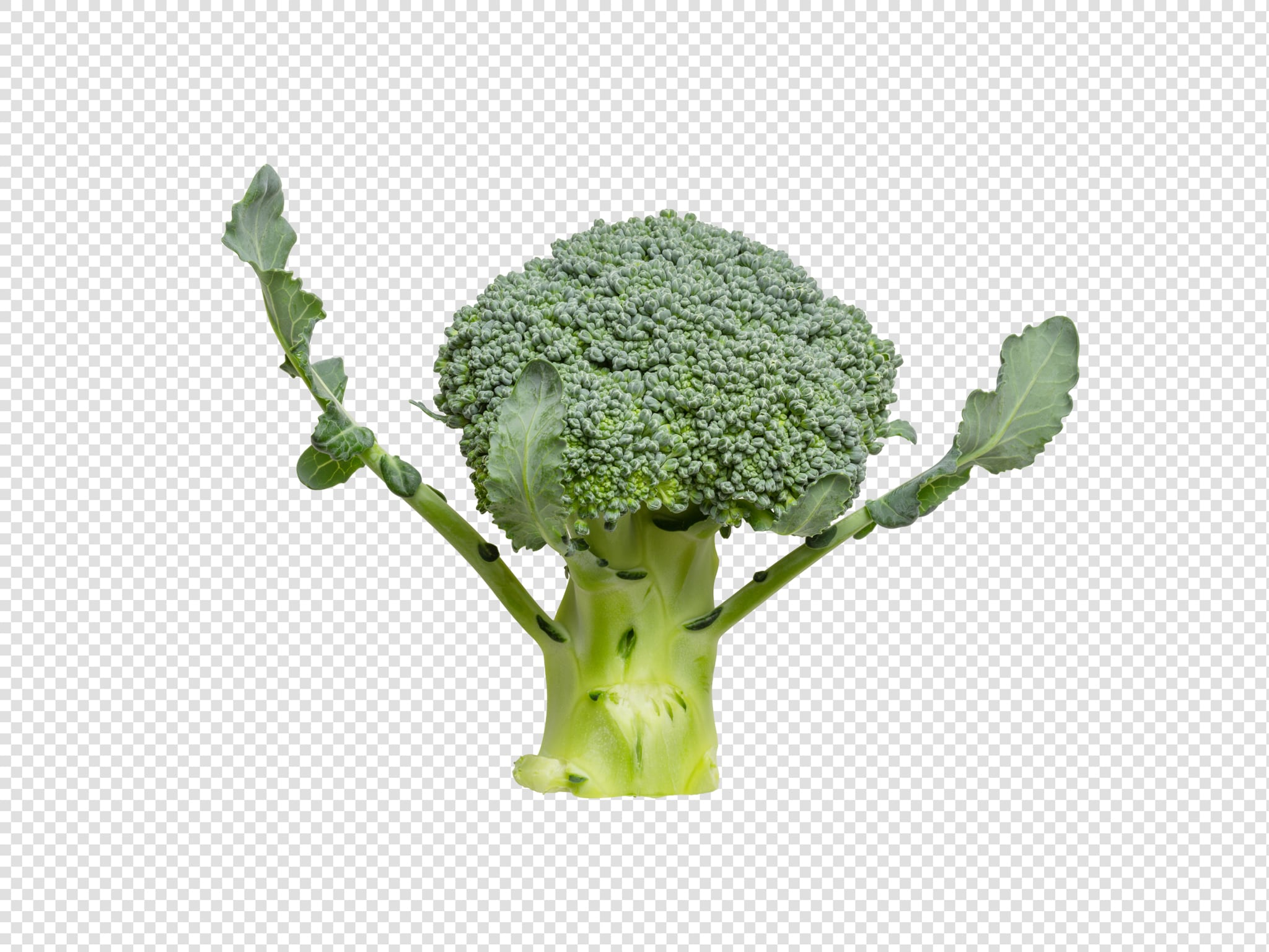 Isolated Broccoli psd image