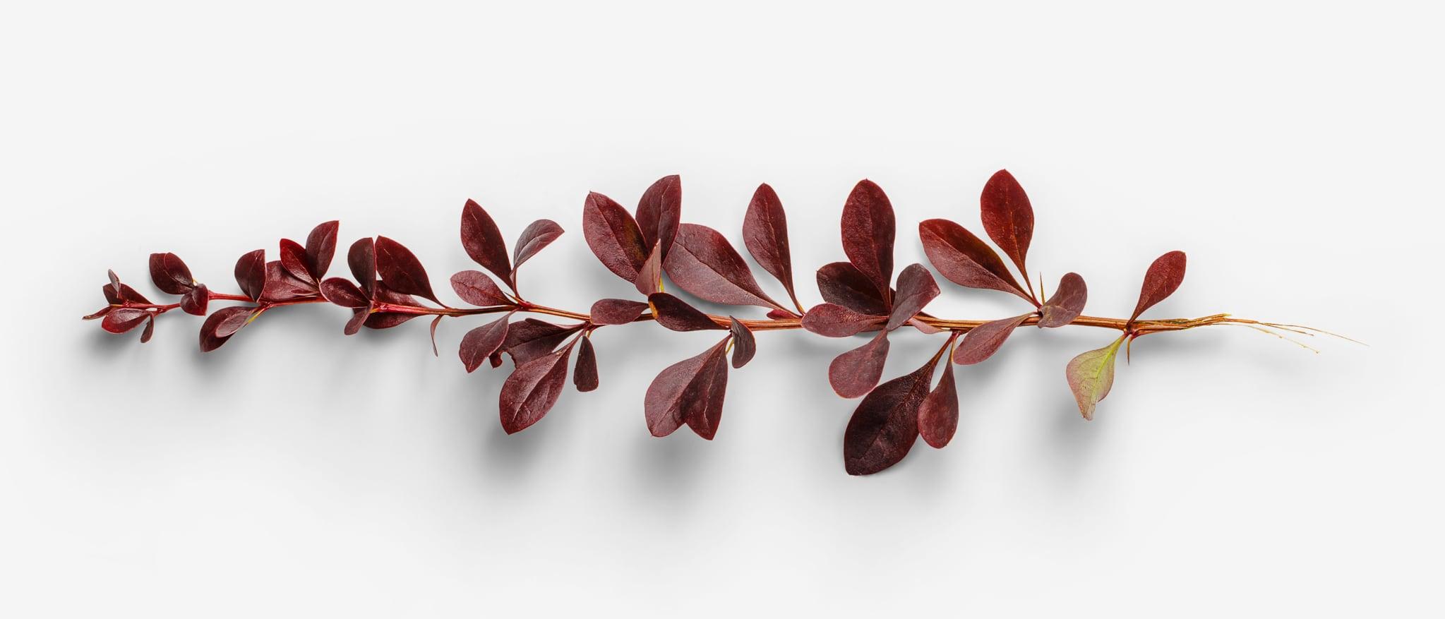Leaf image with transparent background