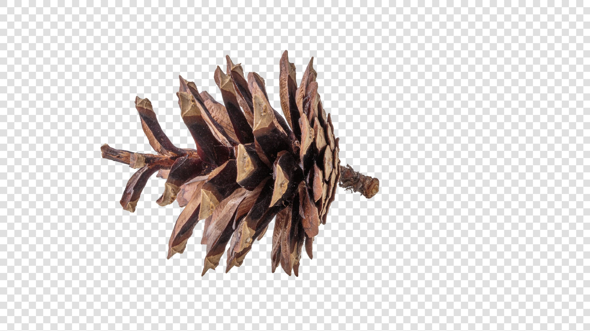 Dried flower image with transparent background