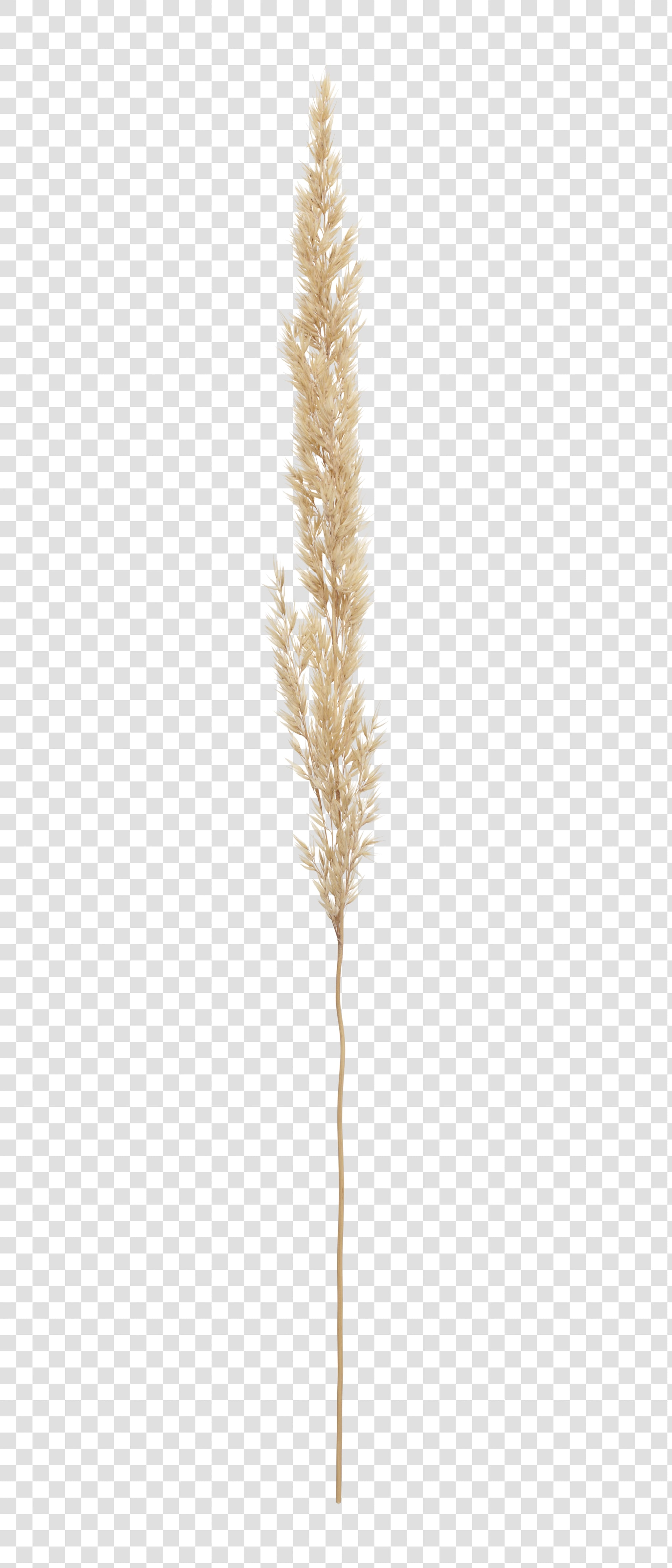 Spikelet PSD isolated image