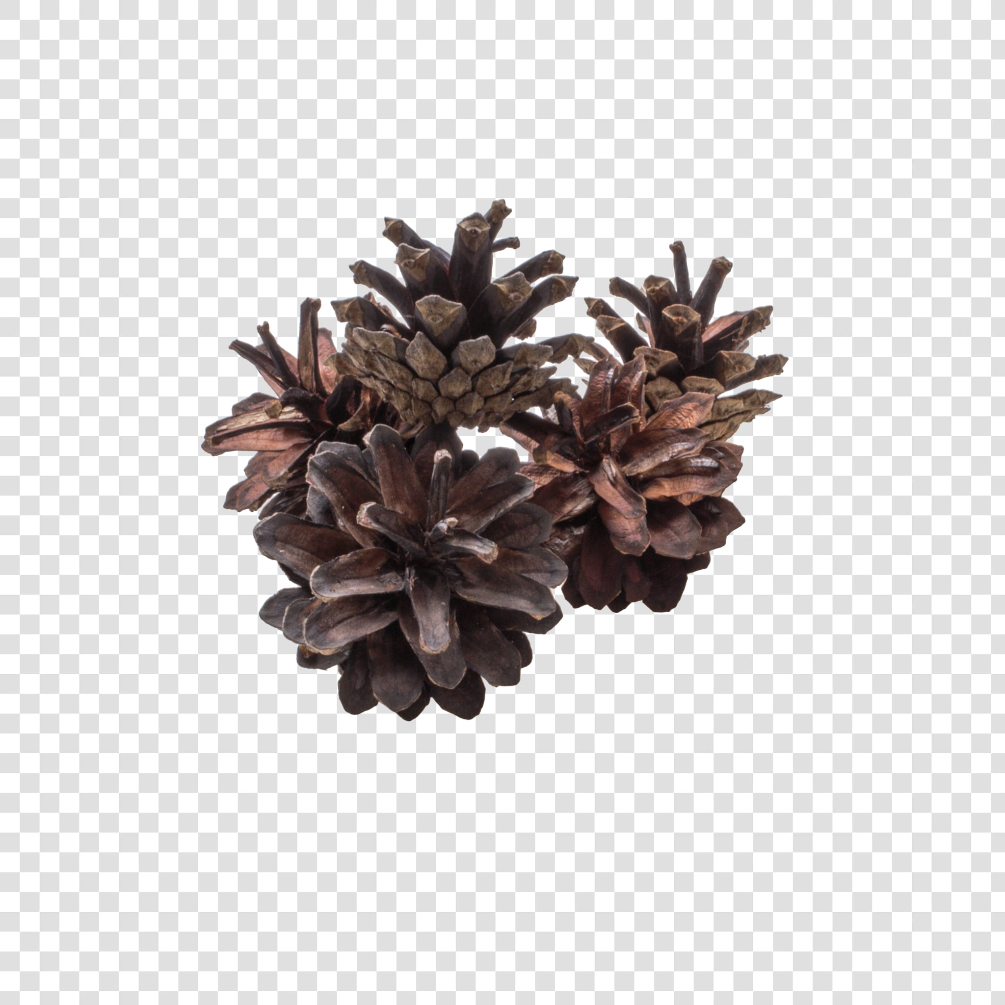Dried flower PSD layered image