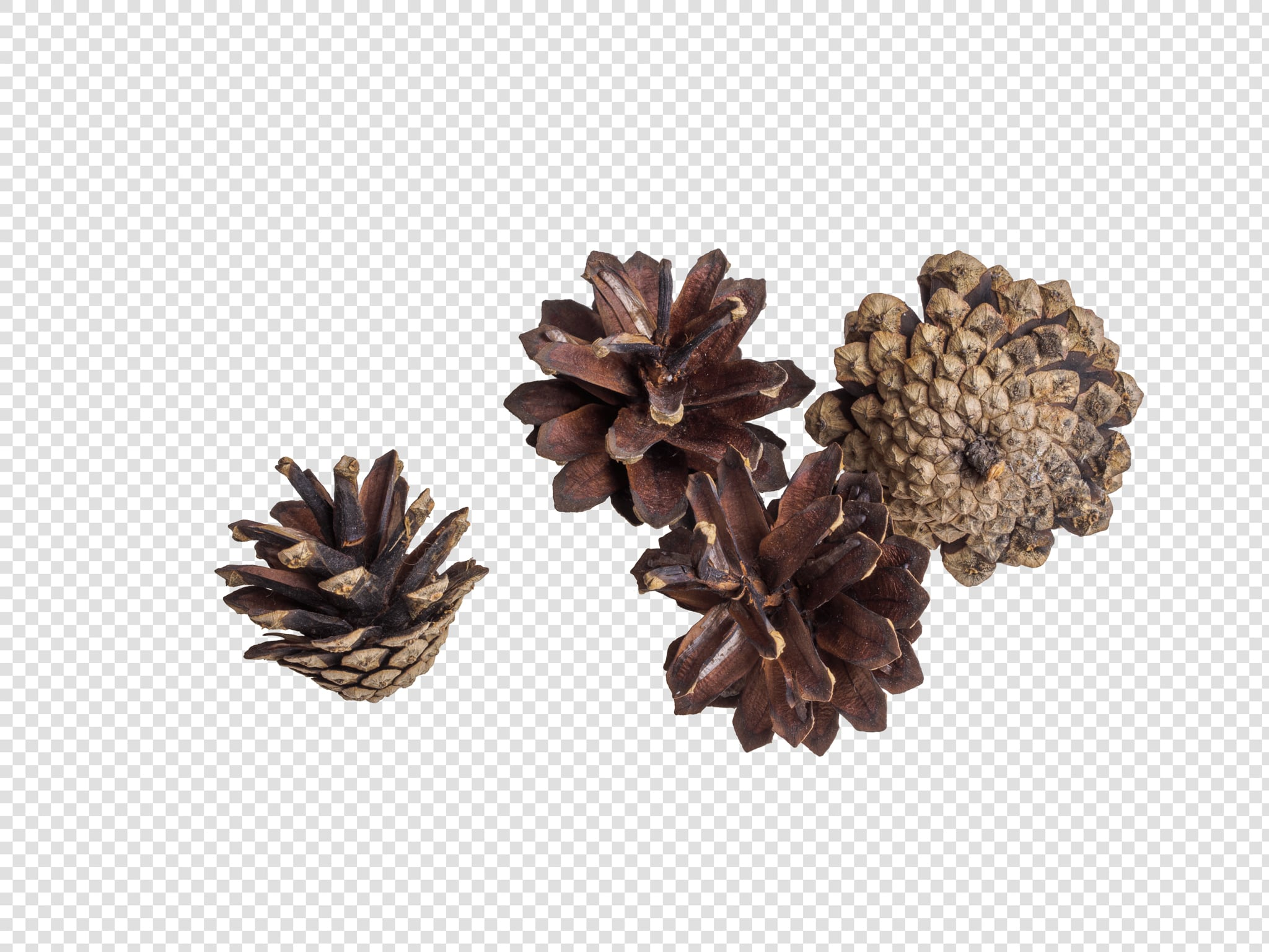Dried flower PSD isolated image
