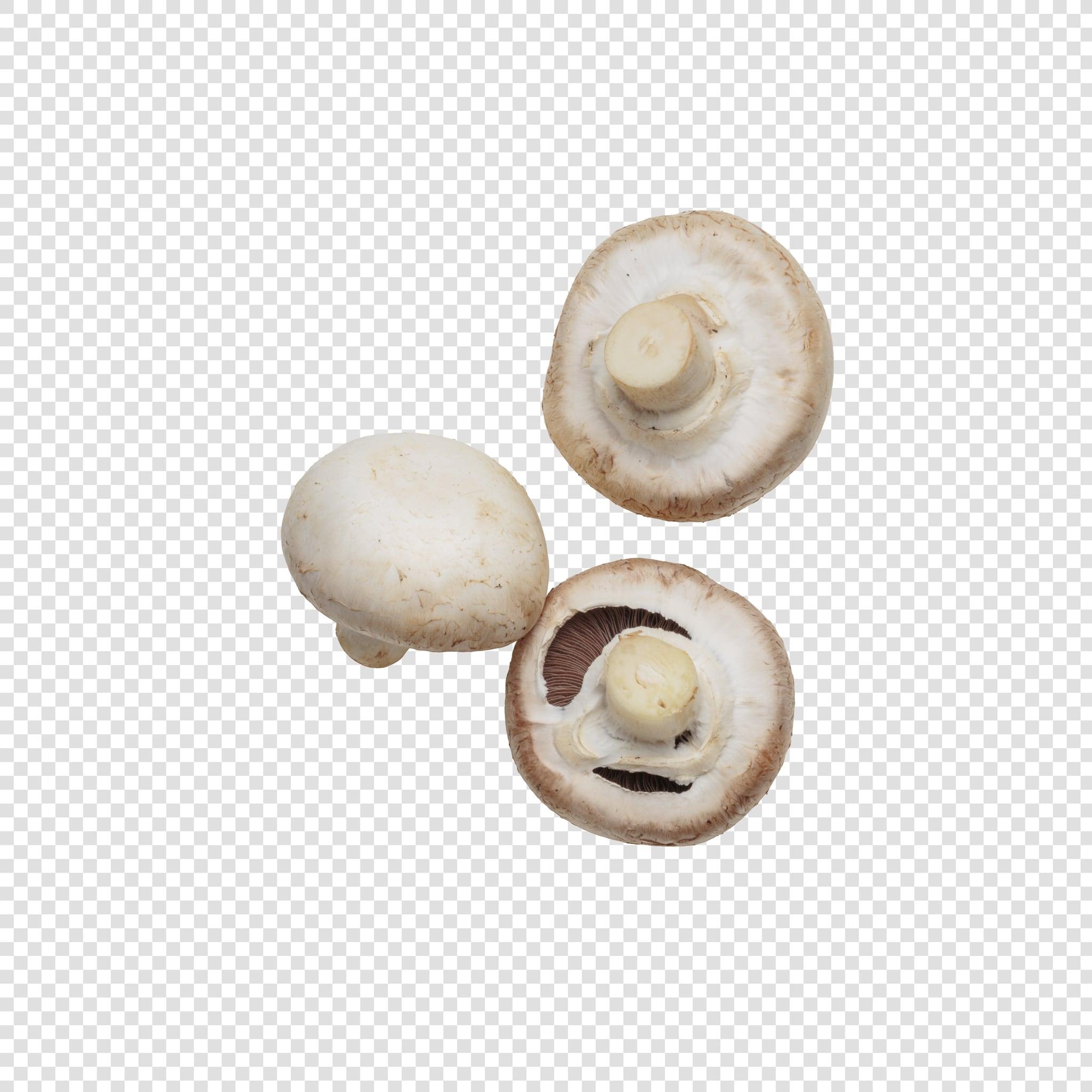 Champignon PSD layered image