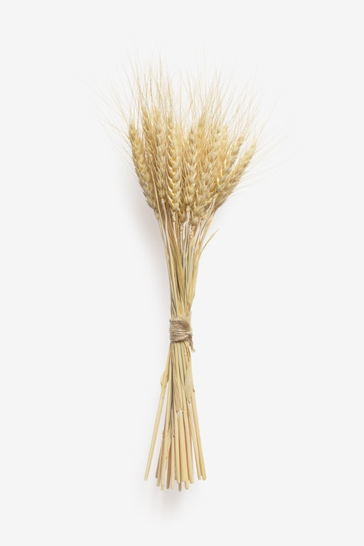 Clean Isolated PSD image of Spikelet on transparent background with separated shadow